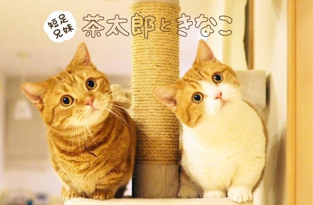 Chataro and Kinako