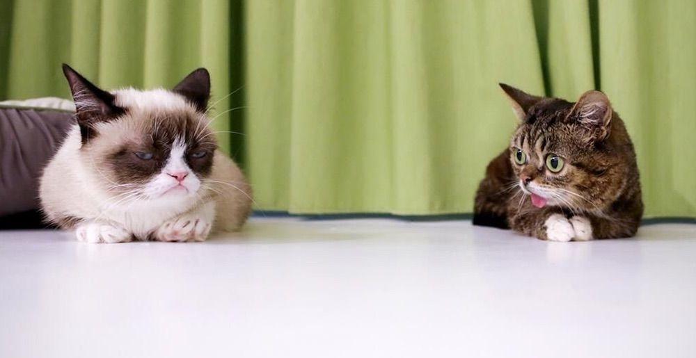 Grumpy Cat and Lil BUB Together