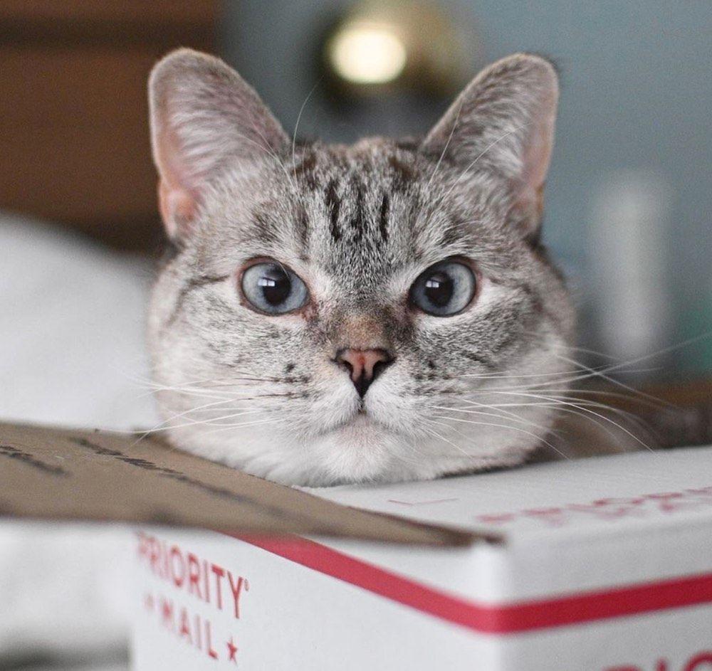 Nala Cat is the most-followed Instagram cat celebrity.