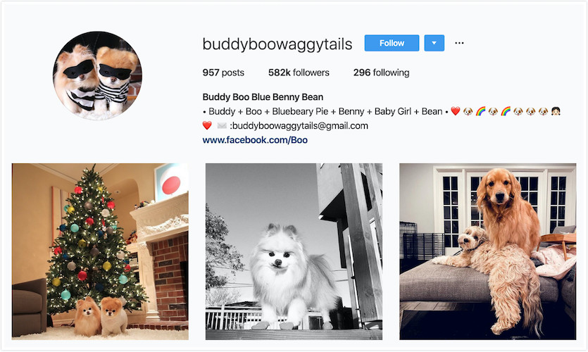 Instagram Profile of Buddy and Boo