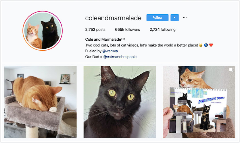 Instagram Profile of Cole and Marmalade