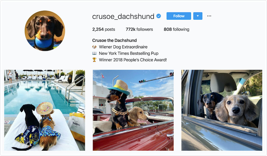 Instagram Profile Crusoe the Dachshund