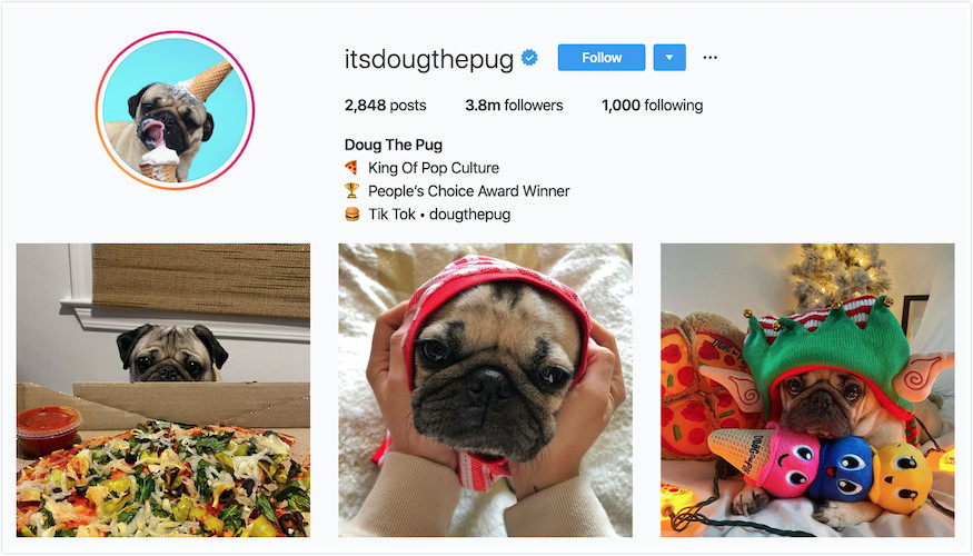 Instagram Profile of Doug The Pug