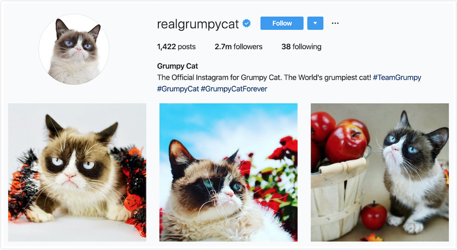 Instagram Profile of Grumpy Cat