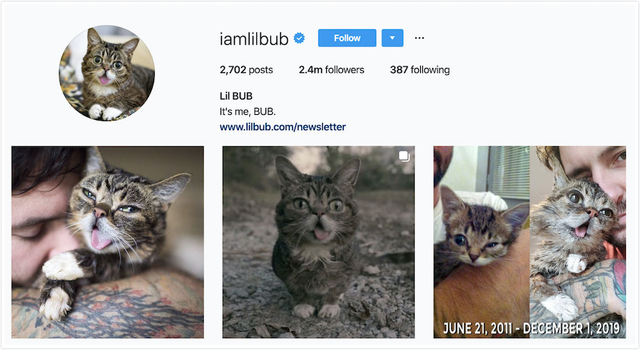Instagram Profile of Lil BUB
