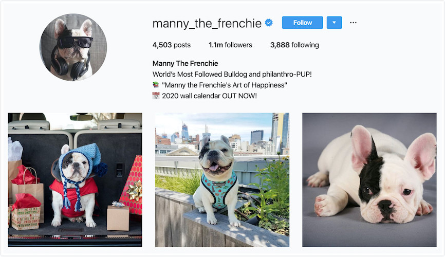 Instagram Profile of Manny The Frenchie