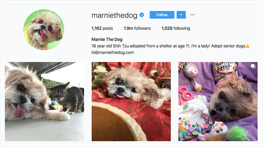 Instagram Profile of Marnie the Dog