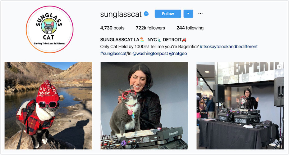 Instagram Profile of Sunglass Cat