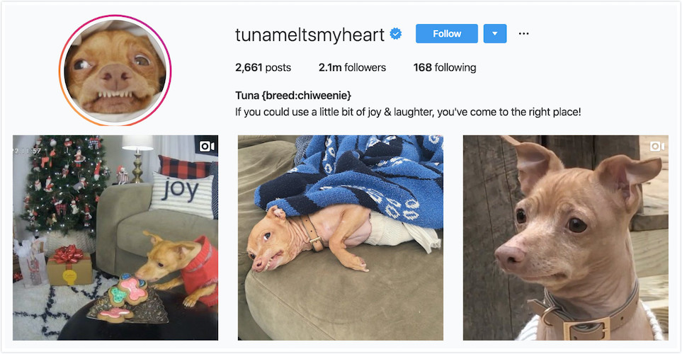 Instagram Profile of Tuna